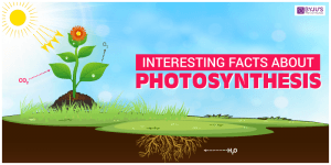 Interesting Facts About Photosynthesis