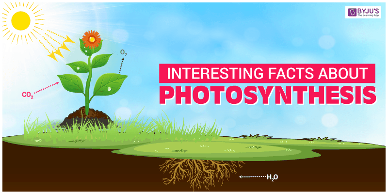 Interesting Facts About Photosynthesis 1